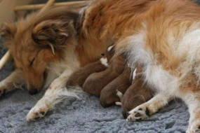 Fiamma an her puppies