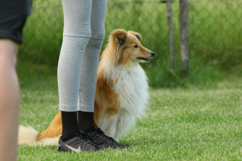 June 7/8, 2019: Obedience seminar with Christa Enqvist in Engen