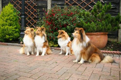 Family ties (f.l.t.r.): Mum Fiamma, Giano, Flame and Dad Fabio, Ashford, May 2014