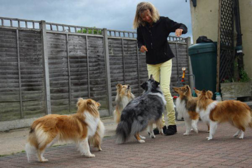 Fiamma, Tamina (covered), Nino (in the background), Pebbles, Giano & Flame (f.l.t.r.), Ashford, May 2014