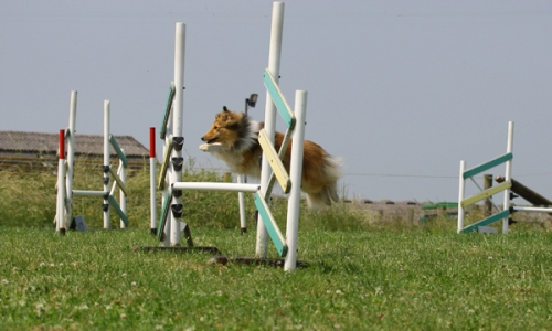 Agility training with Shaun Hunt, Prior's Norton (Gloucester), June 2017