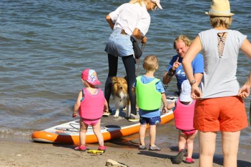 Dog surfing, July 2018