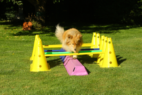 July 3, 2020: Cavaletti training with the latest birthday present
