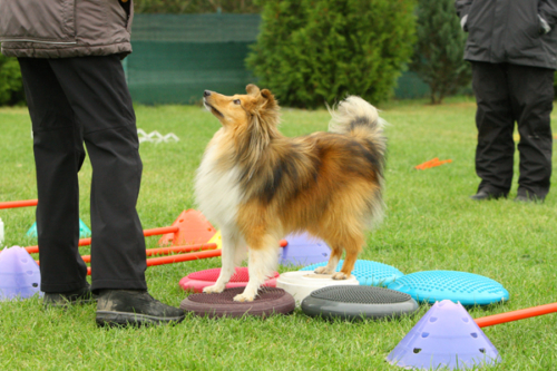 Wixhausen, September 2020:Cavaletti-Seminar with Steffi Rumpf