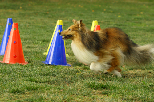 September 2021: Obedience training with Uwe Wehner
