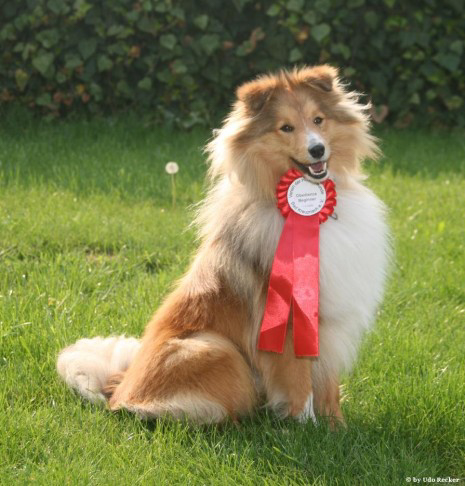 Bijou's first win in a Competitive Obedience tournament, May 2009