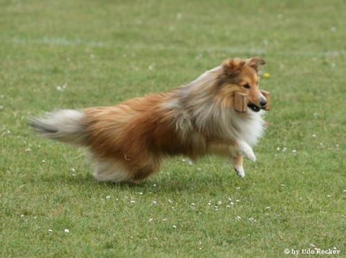 ESSC Sheltie Training Camp Weekend, May 2011