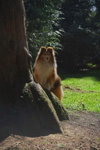 Westonbirt, National Arboretum, April 2015