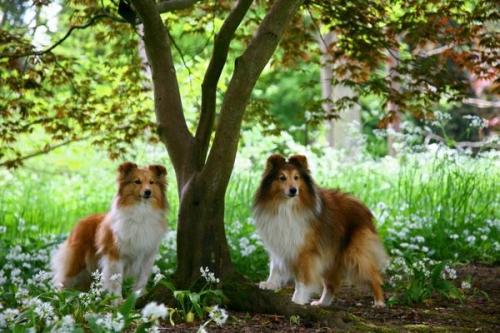 Batsford Arboretum, May 2016: Fabio and Fiamma