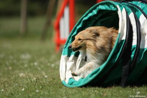 ESSC Sheltie Training Camp Weekend May 2011