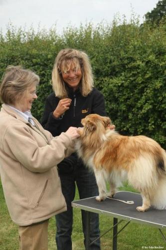 Ringcraft training at Glensanda-Shelties, with Jan Moody, June 2011