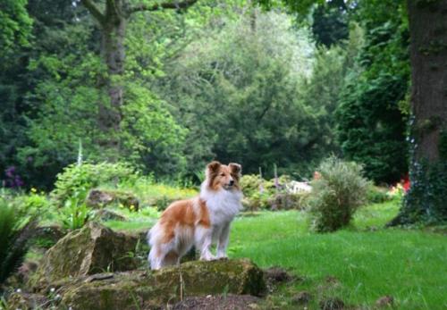 Batsford Arboretum, June 2016