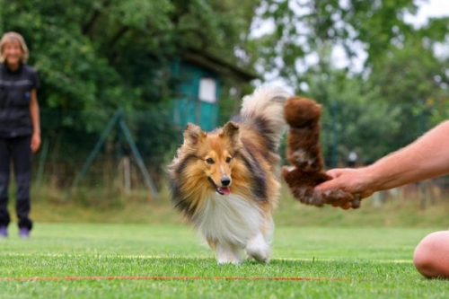 Obedience-Training with Neil Short, Seibersbach, July 2016