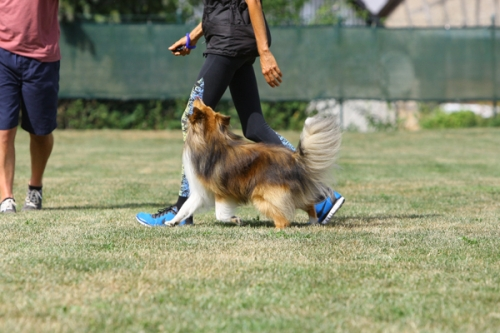 July / August 2018: Obedience seminar with Neil Short in Seibersbach