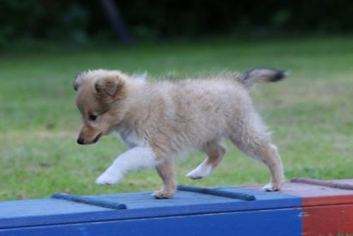July 2013: Puppy agility