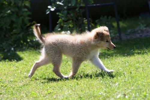 July 2013 (10.5 weeks old)